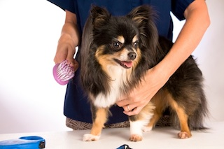 Georjeans Dog Grooming Warrenton VA