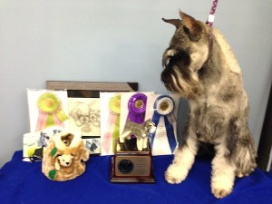 Dominion Kennel Club Awards