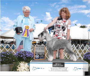 Westchester Kennel Club Best of Breed Award 2016
